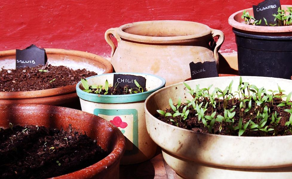 actividades jardin residecia personas mayores demencia